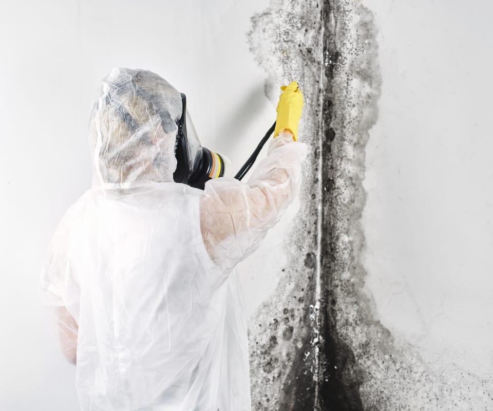 mold abatement